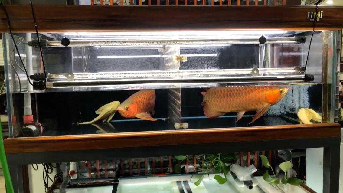 北京订做鱼缸慢慢等