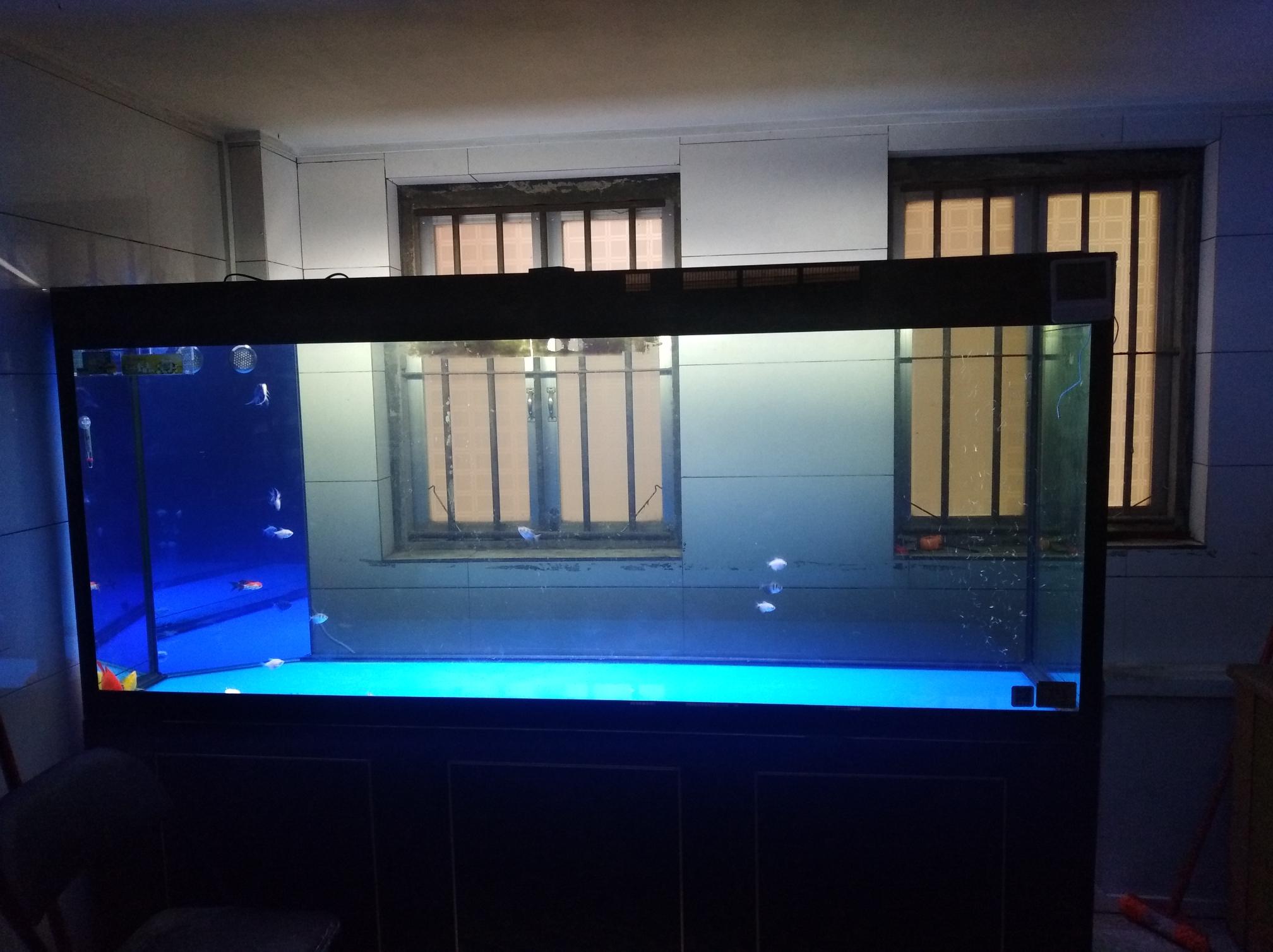 北京观赏鱼吧懂得越多套得越深 北京龙鱼论坛 北京龙鱼第3张