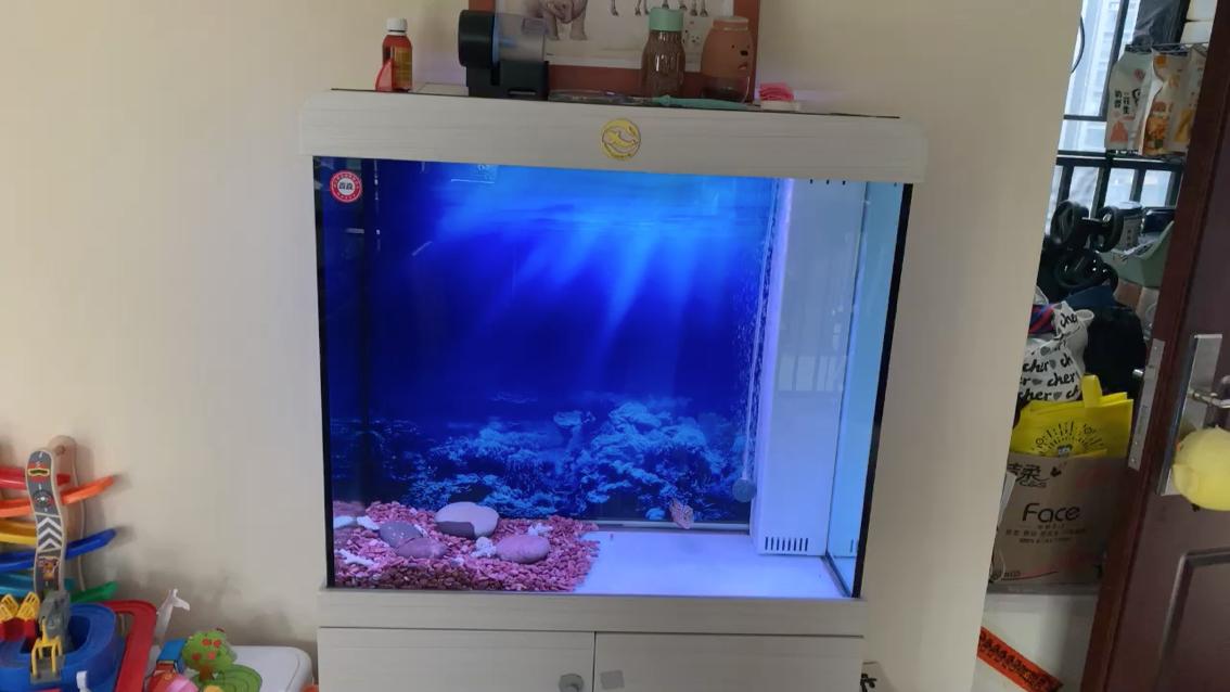 开灯再记录下 北京观赏鱼 北京龙鱼第1张