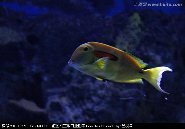这水流有点刺激 北京龙鱼论坛 北京龙鱼第2张