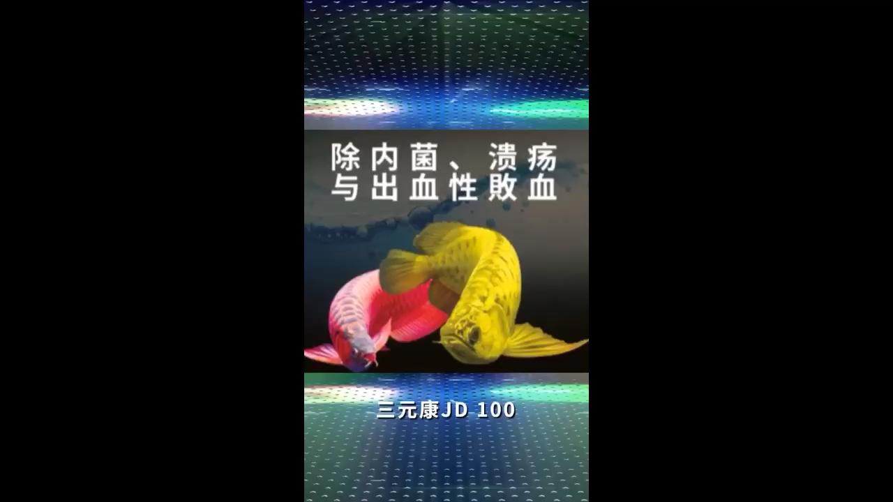 北京水虎鱼三元康JD100