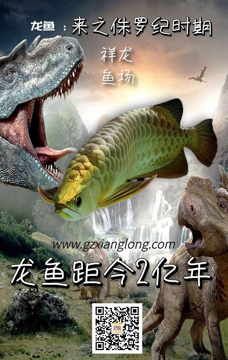 北京祥龙水族馆恭贺本市鱼友新春快乐祝福2021
