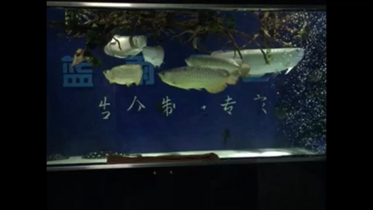 巨龙 北京龙鱼论坛 北京龙鱼第1张