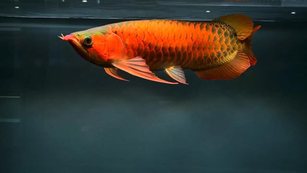 北京最大花鸟市场整体的美是一种耐看的美 北京观赏鱼 北京龙鱼第1张