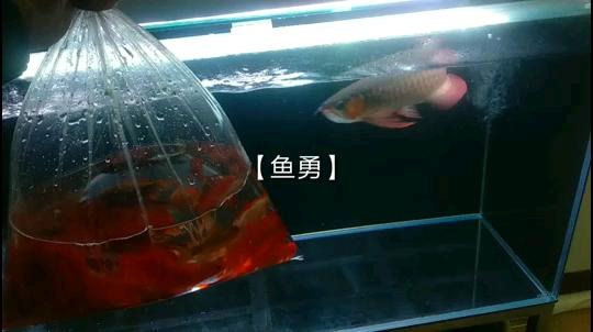 北京鱼缸水族批发地址哎呀呀