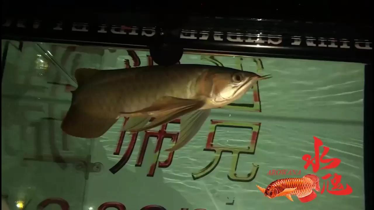 北京海水水族市场停电拍拍你