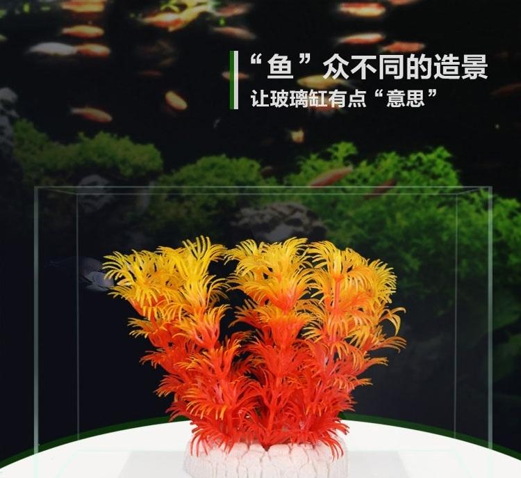 闲来无事签到 北京观赏鱼 北京龙鱼第2张