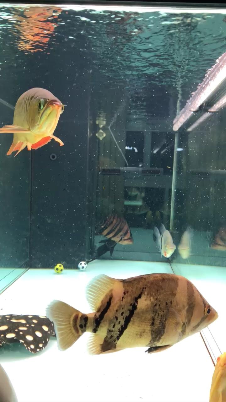 鱼缸微型气泡