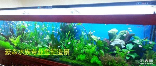 鱼缸微型气泡 北京观赏鱼 北京龙鱼第2张