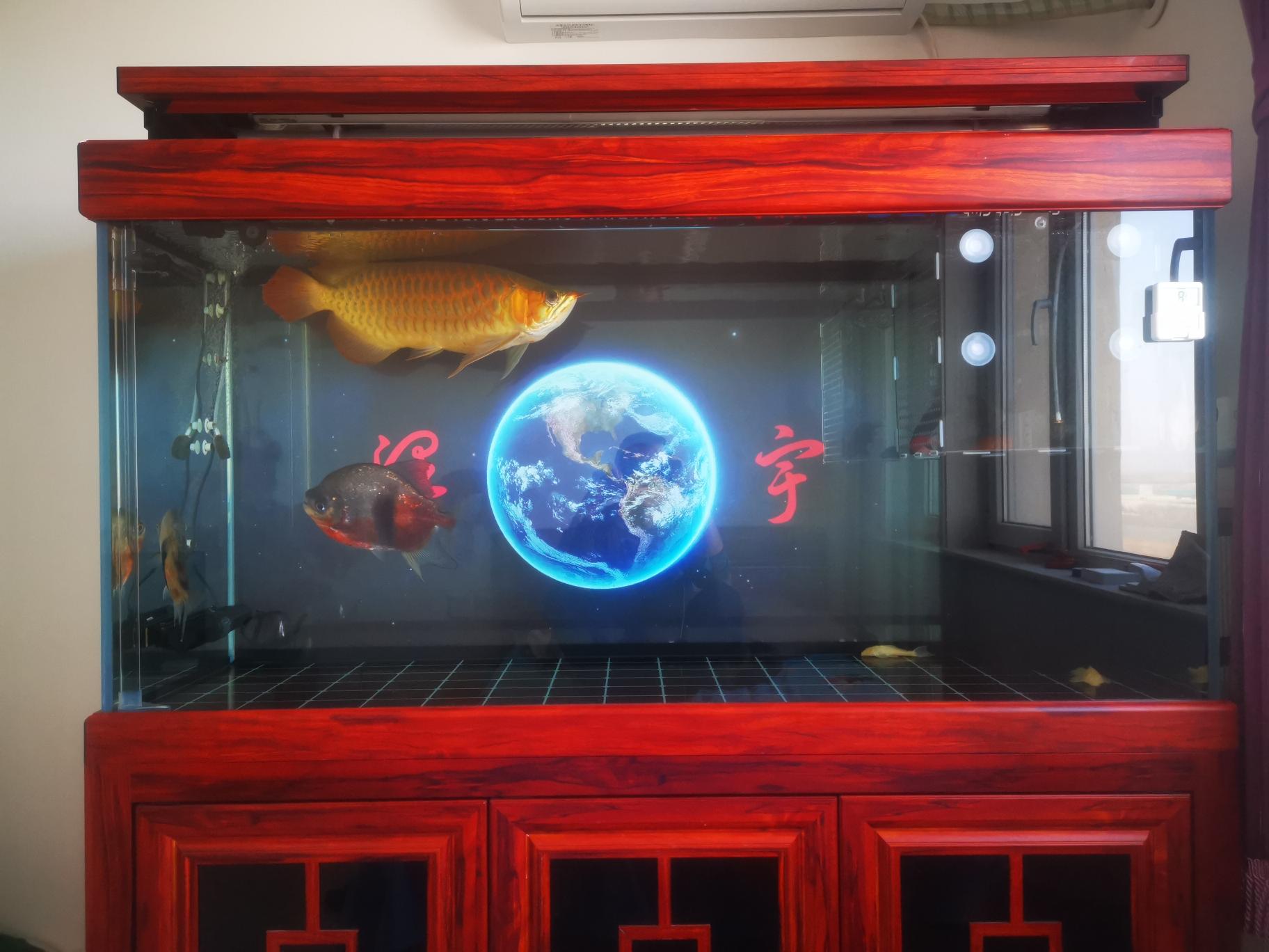 日常签到 北京观赏鱼 北京龙鱼第1张