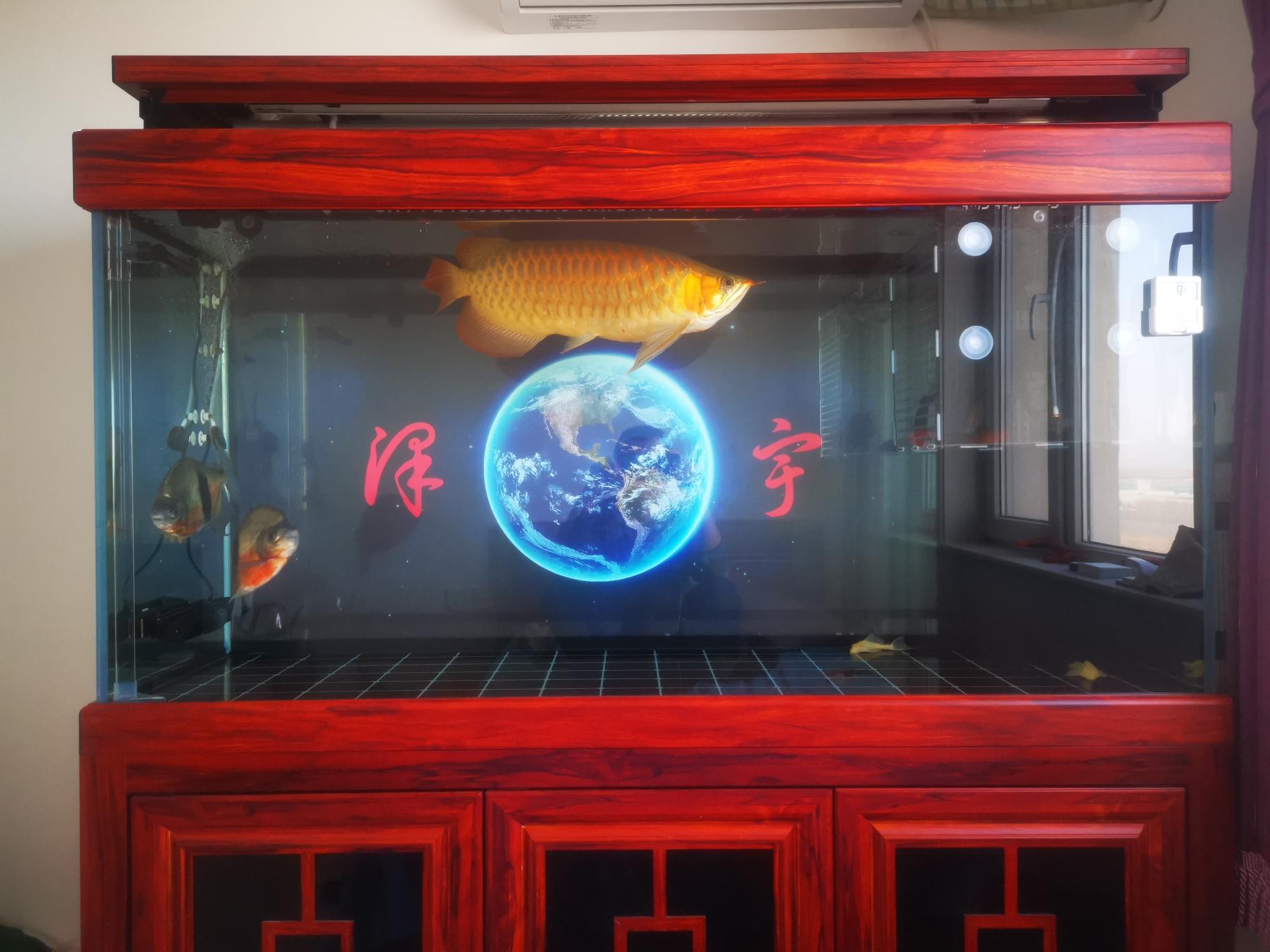 日常签到 北京观赏鱼 北京龙鱼第2张