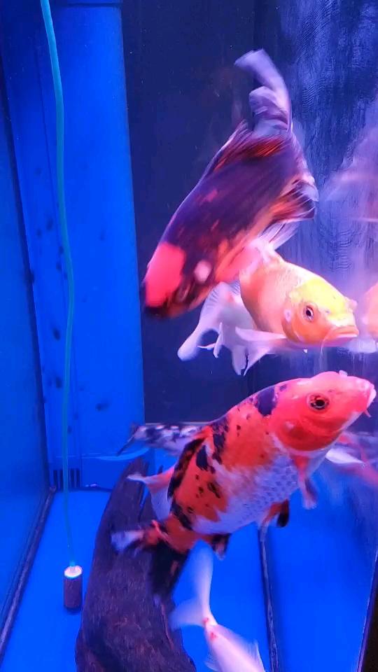以鱼会友有没有杭州的鱼友可以交流