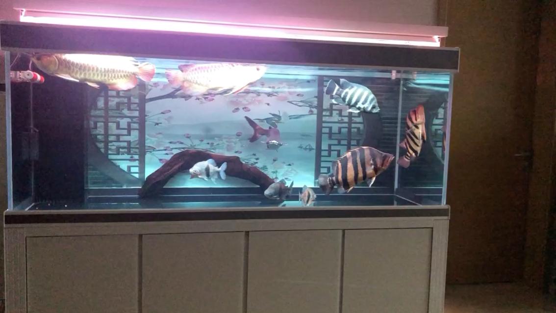 北京订做鱼缸厂家美么 北京观赏鱼 北京龙鱼第1张