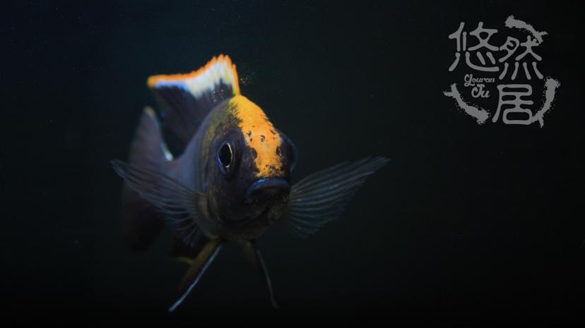 北京花鸟鱼虫市场地址分享科普 北京观赏鱼 北京龙鱼第1张