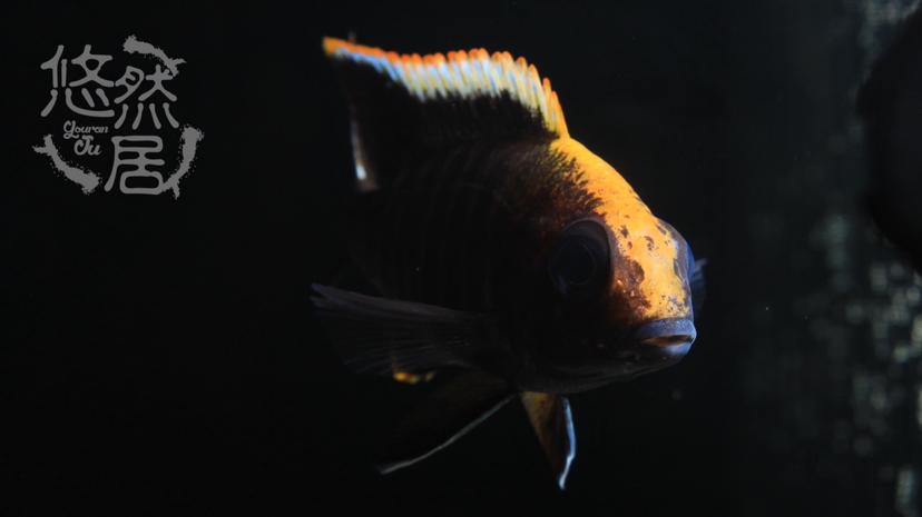 北京花鸟鱼虫市场地址分享科普 北京观赏鱼 北京龙鱼第3张