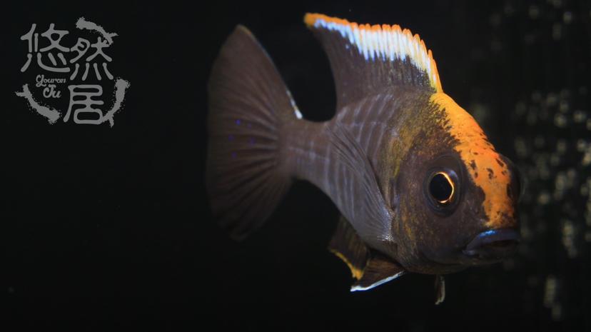 北京花鸟鱼虫市场地址分享科普 北京观赏鱼 北京龙鱼第4张