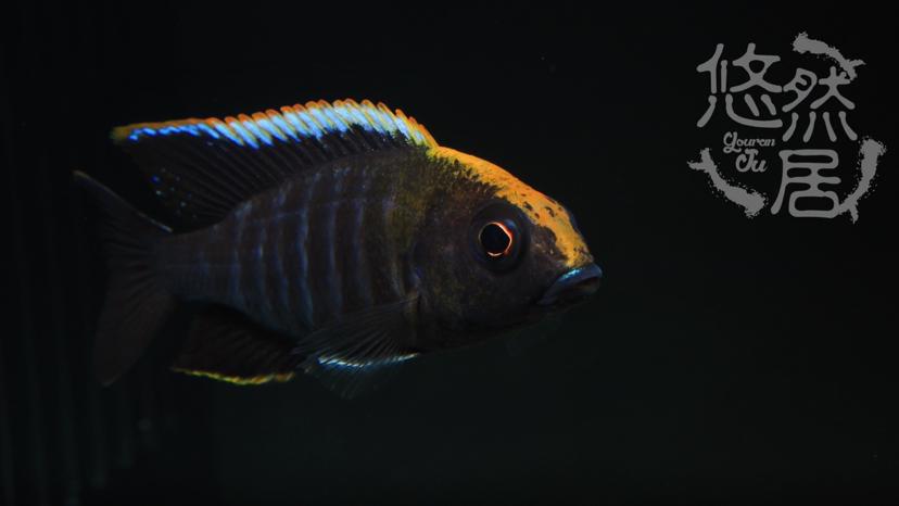 北京花鸟鱼虫市场地址分享科普 北京观赏鱼 北京龙鱼第7张