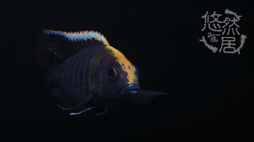 北京花鸟鱼虫市场地址分享科普 北京观赏鱼 北京龙鱼第8张