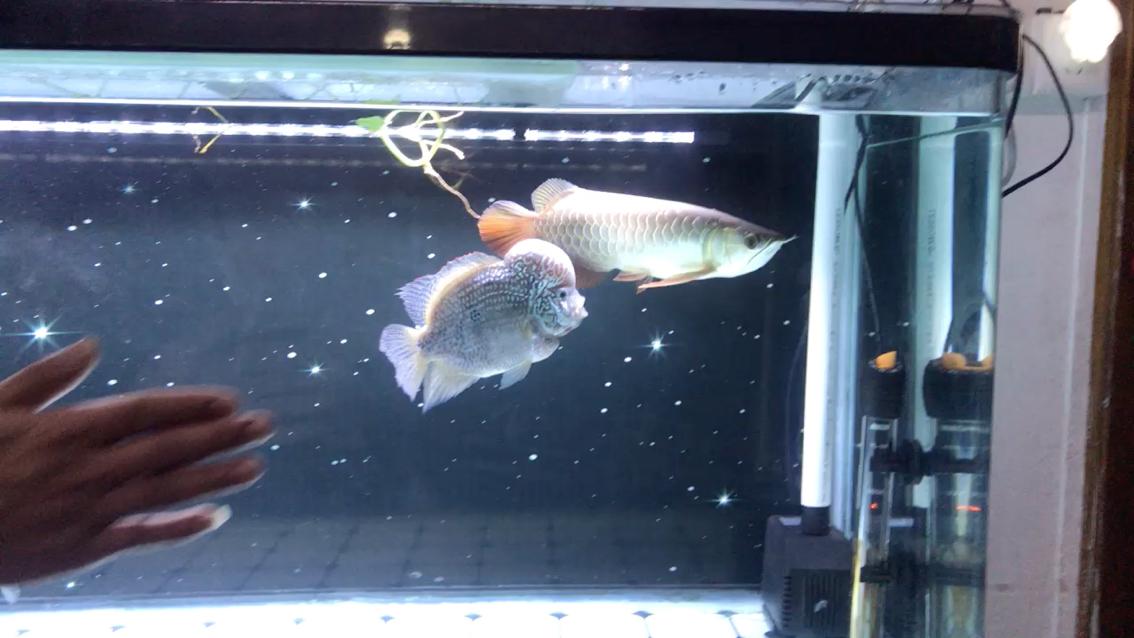 北京淡水观赏鱼批发怎么拍鱼缸都不怕