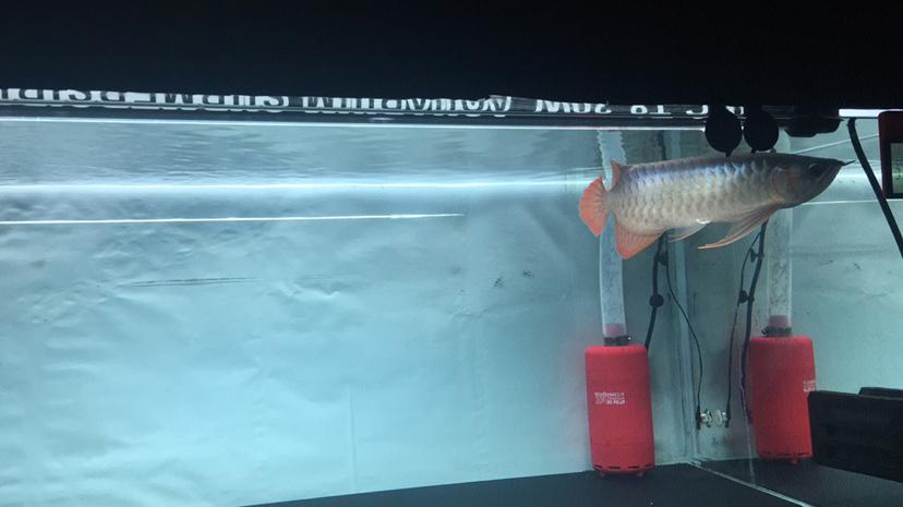 北京哪个水族店卖女王大帆上滤鱼缸底面有滤材渣子