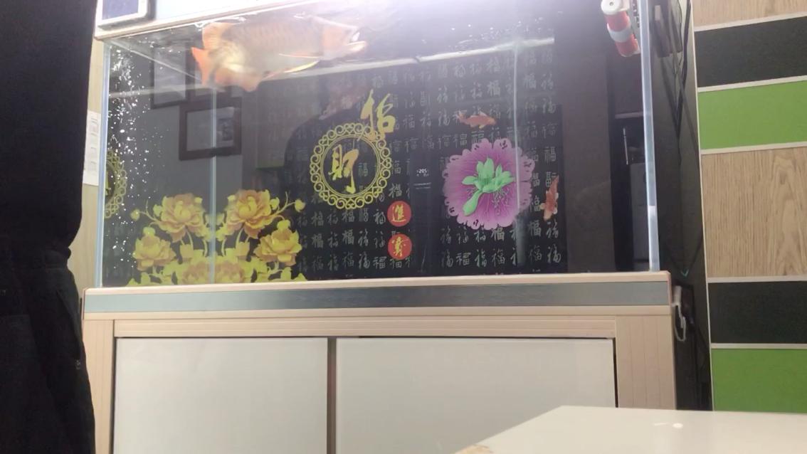 北京豹纹夫批发市场今天试吃新食物 北京龙鱼论坛 北京龙鱼第1张