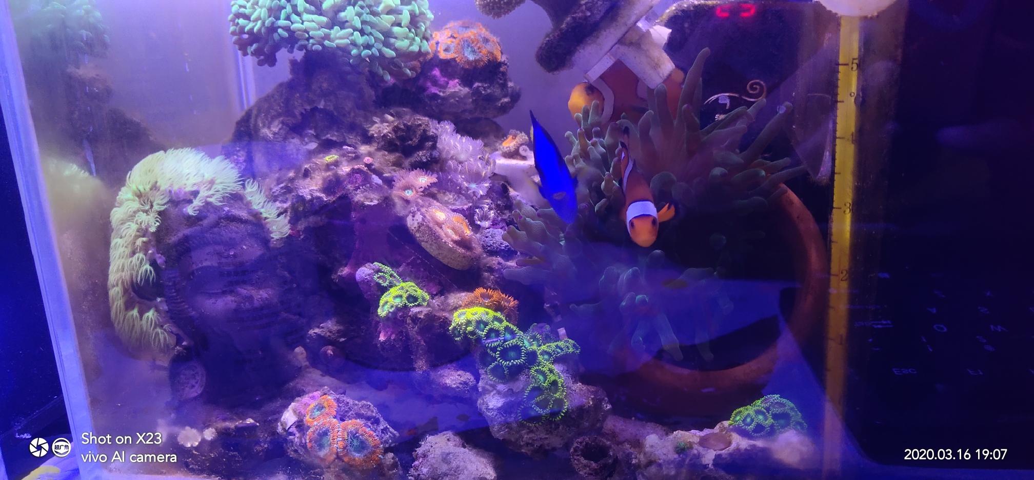 群游得小丑鱼是不是都没有配对