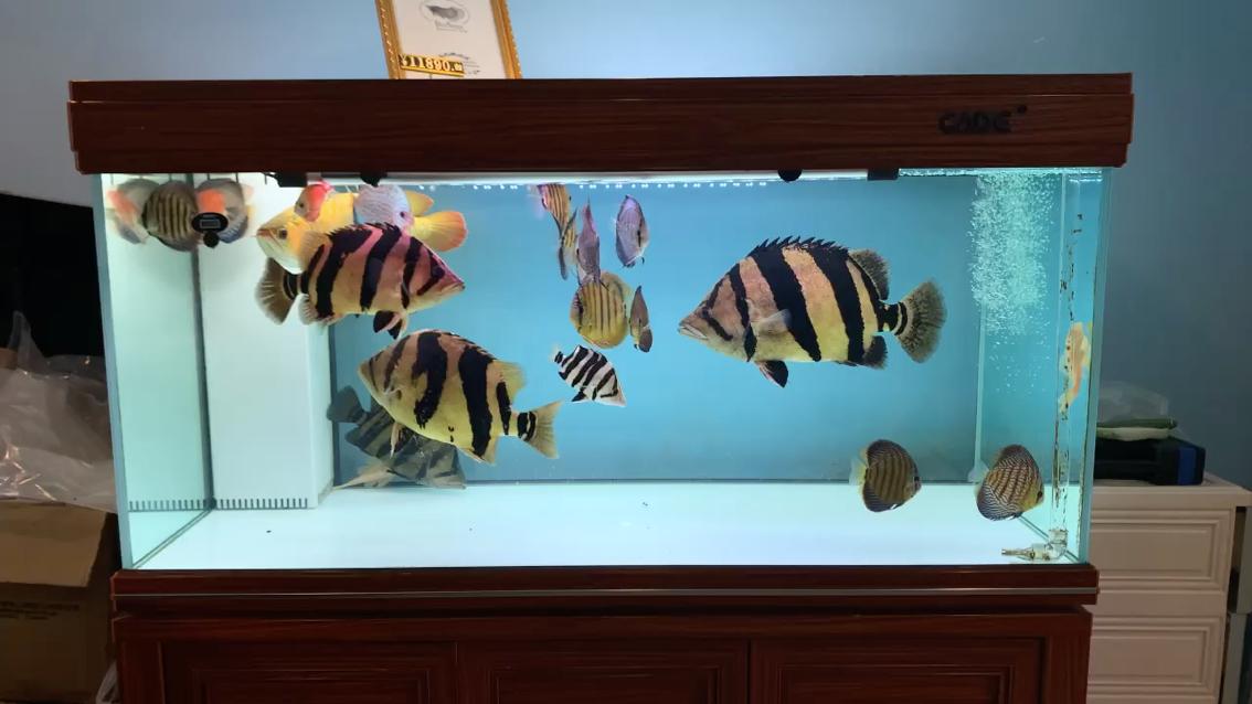 太挤了 北京观赏鱼 北京龙鱼第1张