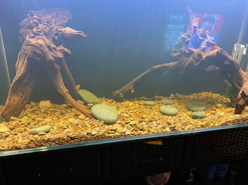 其它中小型鱼 北京观赏鱼 北京龙鱼第1张