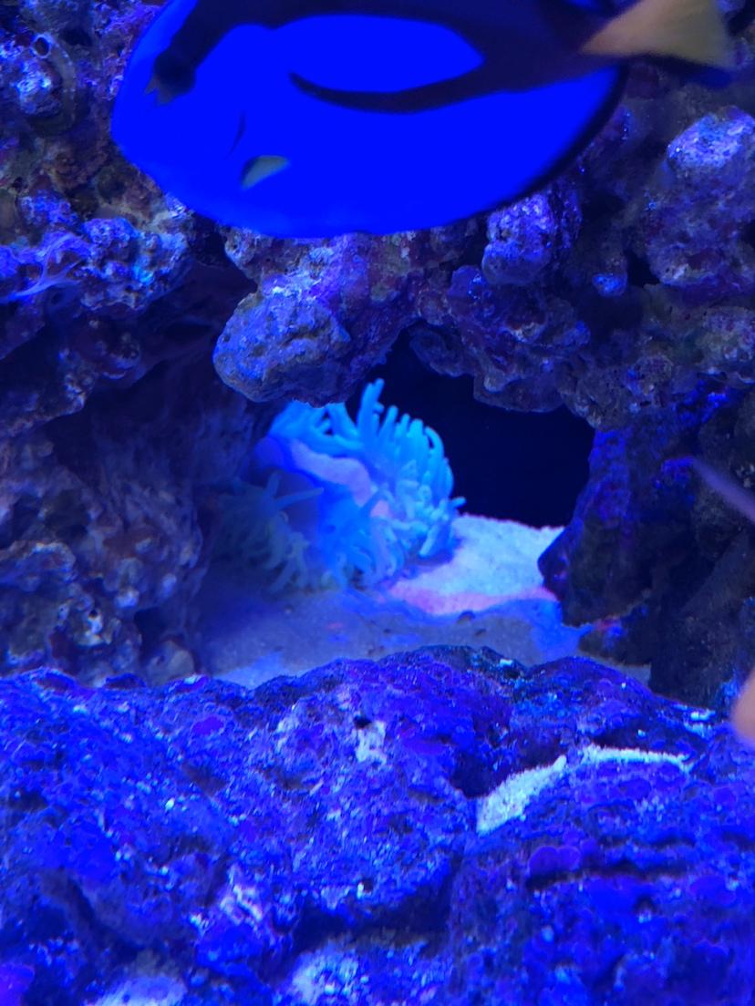 北京皇冠黑白魟鱼常见疾病请问紫点白葵怎么才能落根吧?发愁 北京观赏鱼