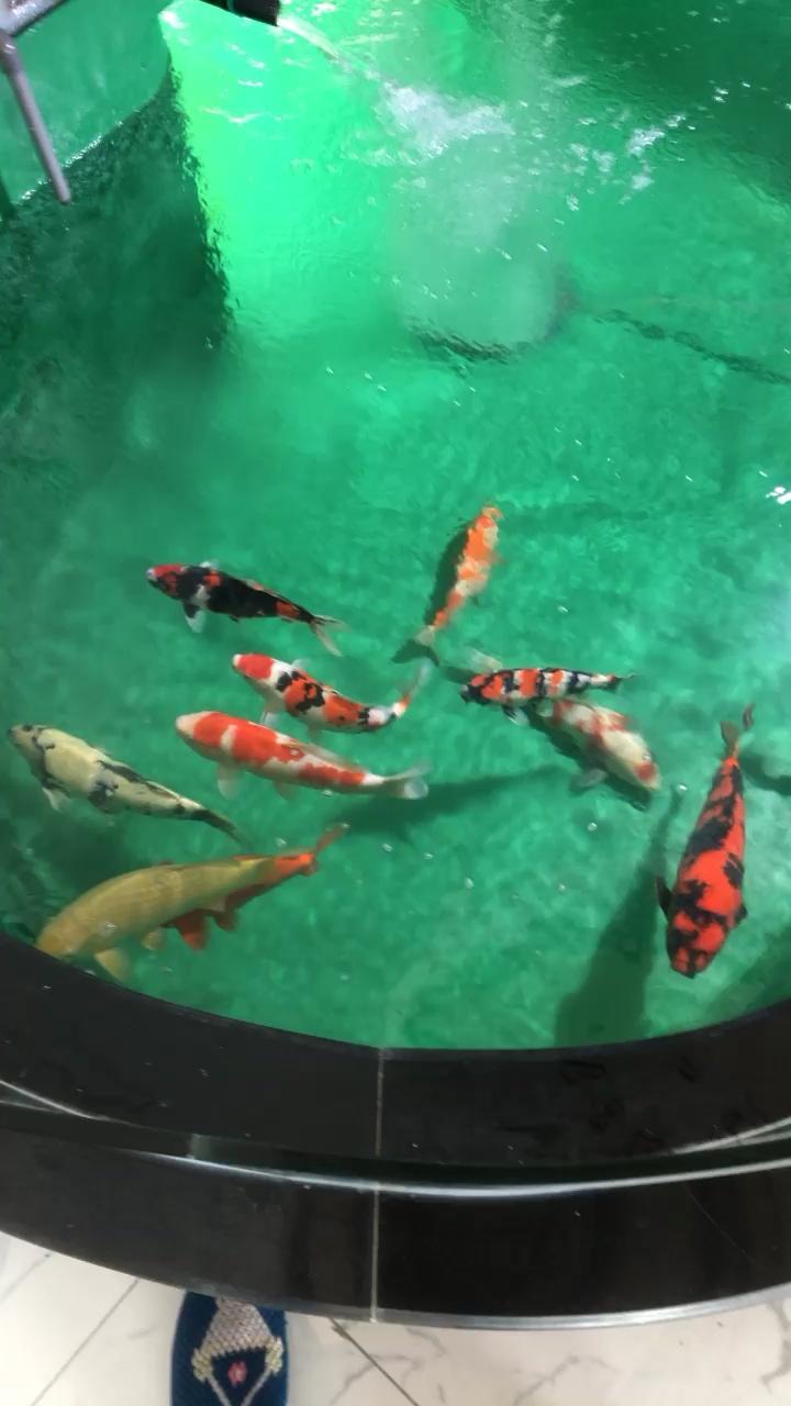北京有哪些水族馆天气转暖