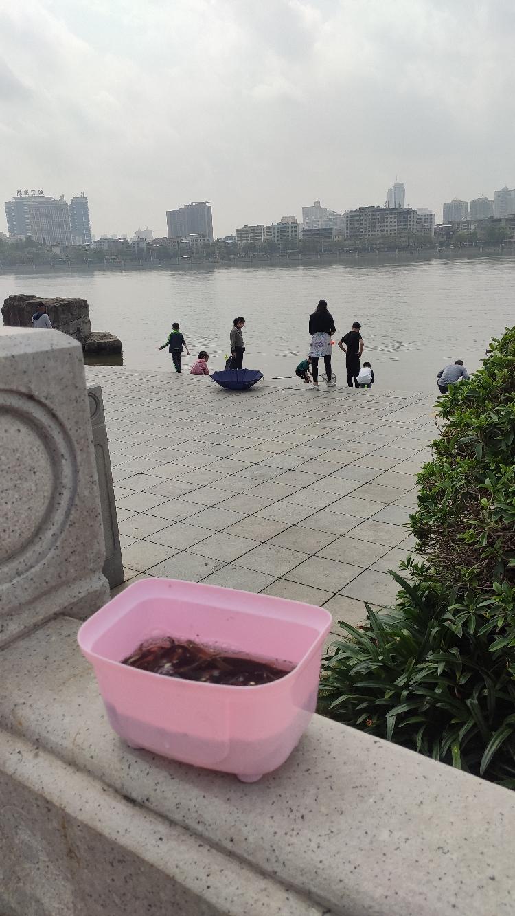 北京细线银板鱼粗线黑桃收获不错 北京龙鱼论坛 北京龙鱼第4张
