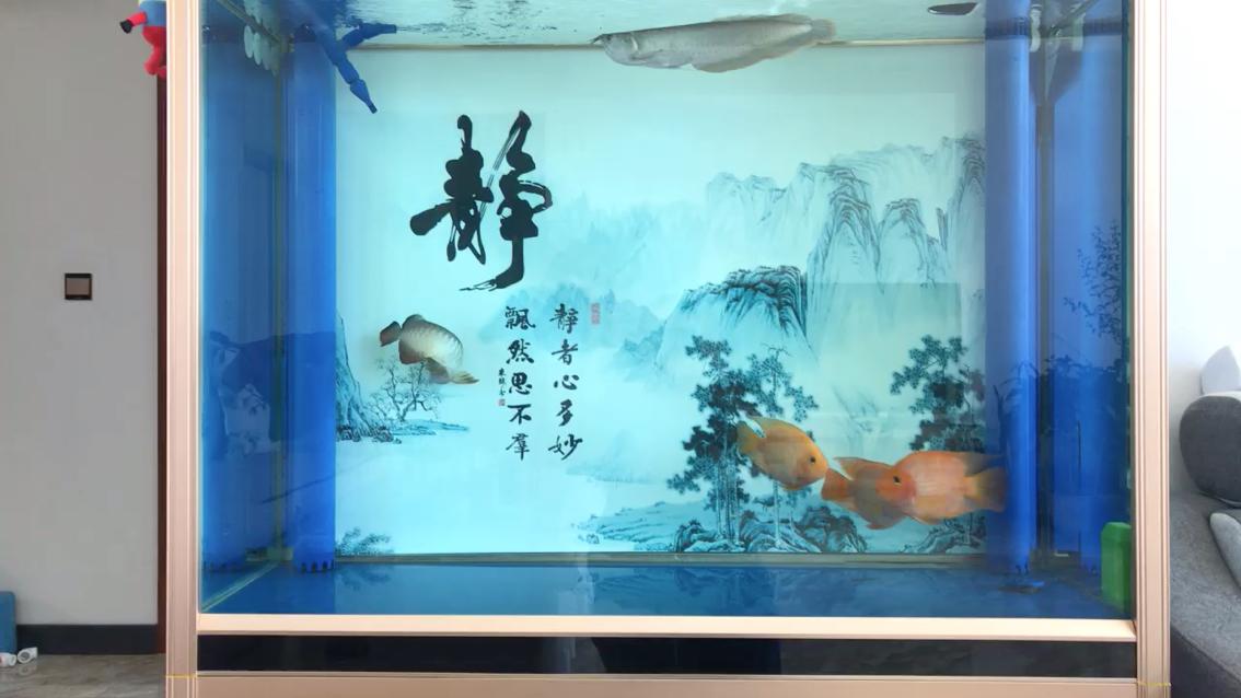 北京银龙的价格龙鱼打架输了是这样的么