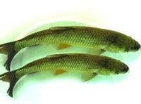 开缸第二天 北京观赏鱼 北京龙鱼第2张